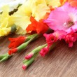 Stock Photo: Closeup of gladiolus flower