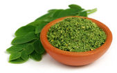 Green and dired moringa leaves — Stock Photo