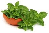 Stevia leaves in bowl — Stock Photo