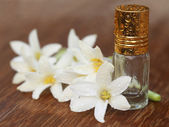 Tuberose or Rajnigandha — Stock Photo