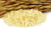 Paddy seeds with rice — Stock Photo