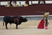 Torero — Foto de Stock