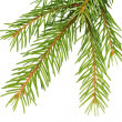 Fir bough — Stock Photo #22281159