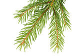 Fir bough — Stock Photo