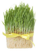 Grass and roots — Stock Photo