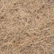 Dry grass — Stock Photo #22379555