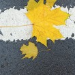 Leaf on asphalt - Stock Photo