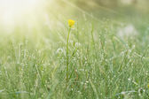 Green Grass with Dewdrops — Stock Photo
