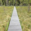 Boardwalk over the Marsh — Stock Photo