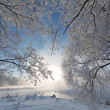 Winter landscape. - Stock Photo