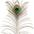Peacock feather. — Stock Photo