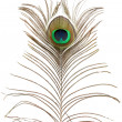 Stock Photo: Peacock feather.
