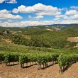 Vineyards and olive trees plantations. — Stock Photo