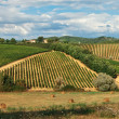 Stock Photo: Rural landscape with vineyards.