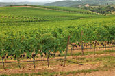 Vineyards all over hills. — 图库照片