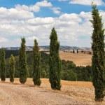 Cypress alley, Tuscany. — Stock Photo