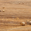 Straw bales over field. - Stock Photo