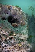 Spiny lobster — Zdjęcie stockowe