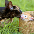 Stock Photo: Mother cat and kitty