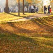Autumn park — Stock Photo #12779303