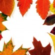 Stock Photo: Autumn leaves frame