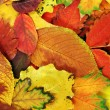 Autumn leaves — Stock Photo #12779504