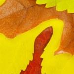 Autumn leaves — Stock Photo #12779705