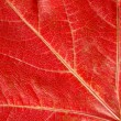 Red leaf texture — Stock Photo #12779812