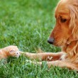 Stockfoto: Dog and kitten