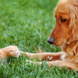 Stock Photo: Dog and kitten
