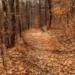 Autumn forest path — Stock Photo