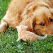 Dog and kitten — Stock Photo #12840412