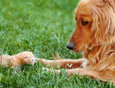Dog and kitten — Stockfoto