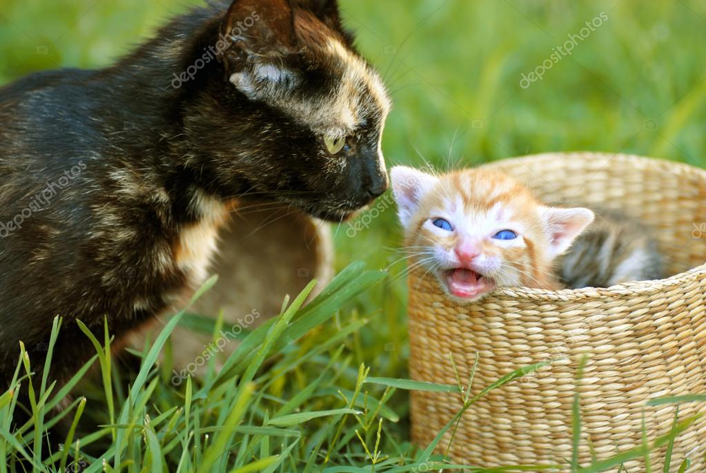 Black tortoiseshell cat mother and her orange baby kitten peeking from basket closeup — Stock Photo #12840513
