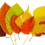 Autumn leaves — Stock Photo #13172120