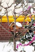 Birds house on tree — Stock Photo