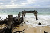 Old rotten pier piles — Stock Photo