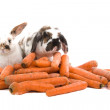 Spotted rabbit with long ears and carrots - Stock Photo