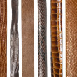 Closeup of various leather belts — Stock Photo