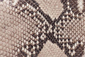 Macro of snake leather — Stock Photo