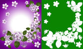 Cherry blossoms. With clipping path — Stock Photo