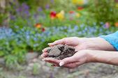 Gardener hands holding soil — Stock Photo
