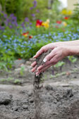 Gardener hands with soil — Stock Photo