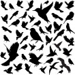 Royalty-Free Stock Vector Image: Set Birds.Vector