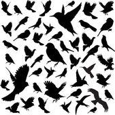 Impostare birds.vector — Vettoriale Stock