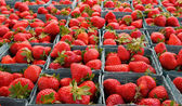 Larger DOF horizontal strawberries — Stock Photo