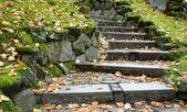 Upward leading steps — Stock Photo