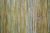 Old bamboo wall — Stock Photo