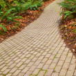 Fern brick path — Stock Photo
