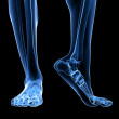 Stock Photo: X-ray foot